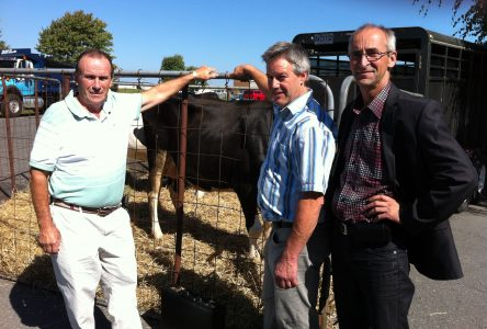 Des producteurs de bovins en colère contre Québec