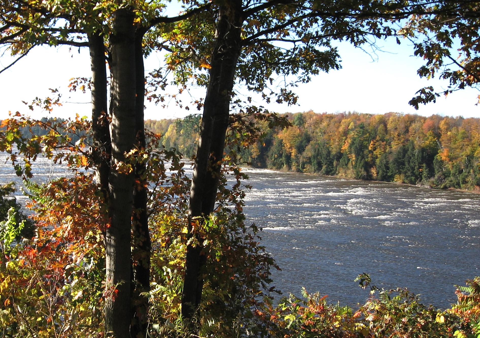 Il faut préserver et entretenir la Forêt Drummond (TRIBUNE LIBRE)