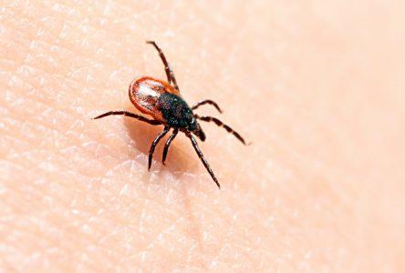 Le risque de contracter la maladie de Lyme est toujours élevé dans Drummond
