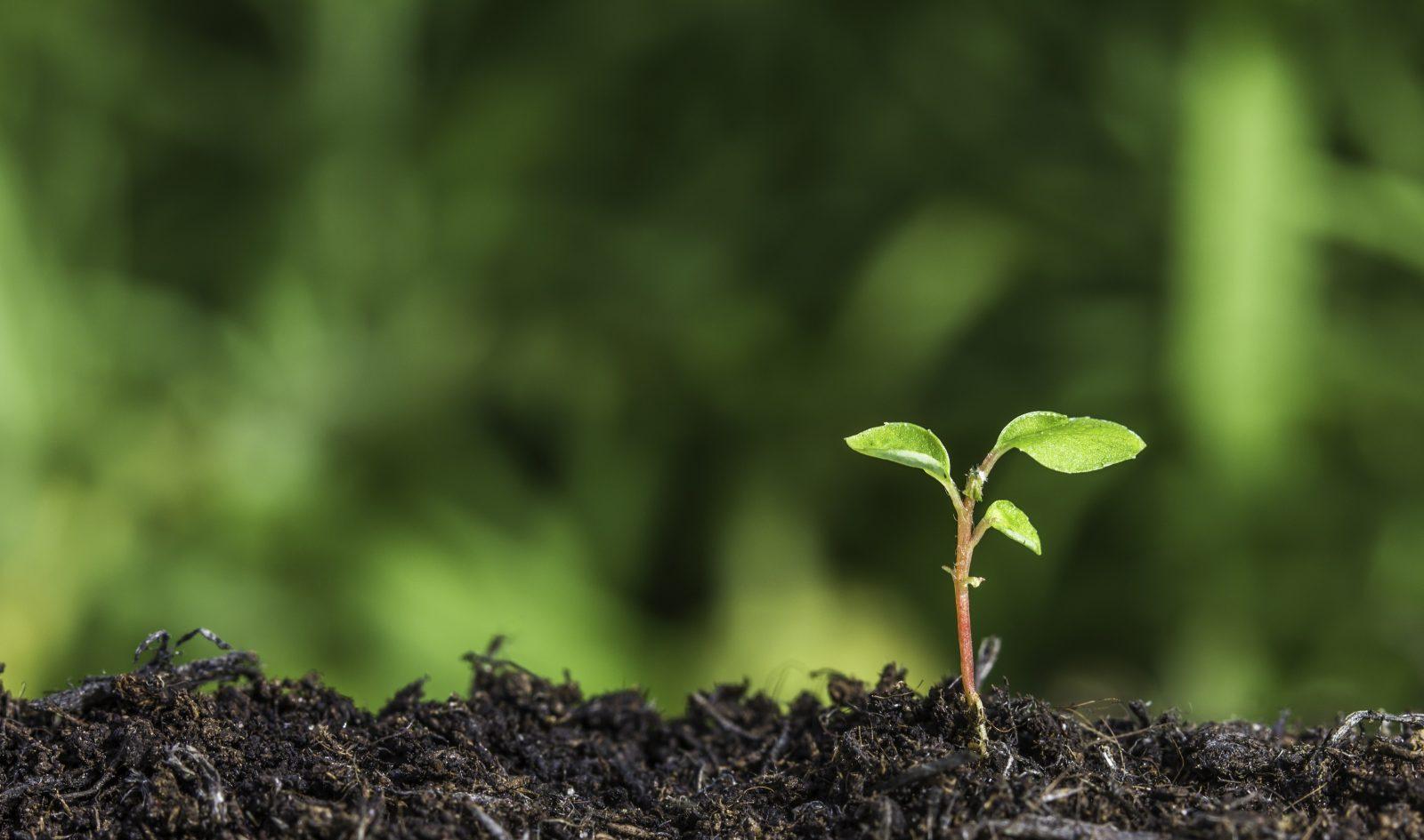 Environnement : une entreprise du Centre-du-Québec écope d'une amende