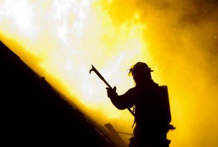 De 300 à 500 porcelets périssent dans l'incendie d'une porcherie à Wickham