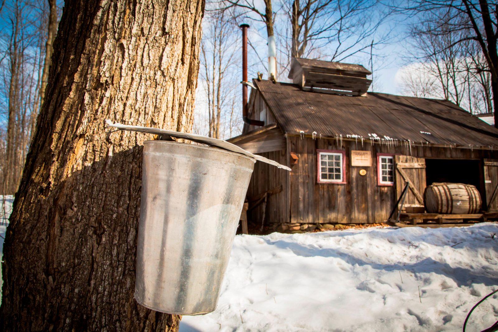 Le Village québécois d'antan annule son «Village sucré»