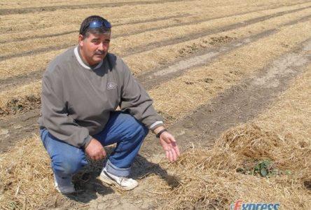 L'abondance de chevreuils cause d'importantes pertes aux producteurs