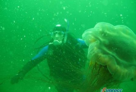 La plongée toujours bien vivante chez les Drummondvillois