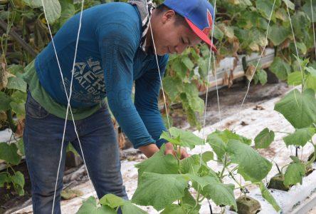 Les travailleurs saisonniers font partie de la solution, selon la CCID