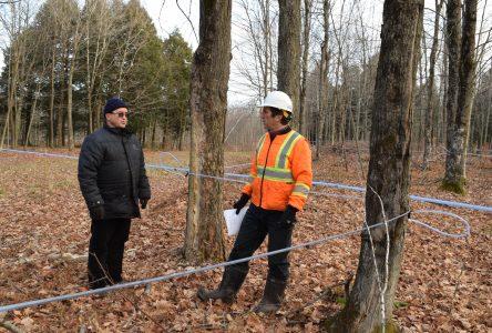 Forêt : encore des séquelles après 20 ans