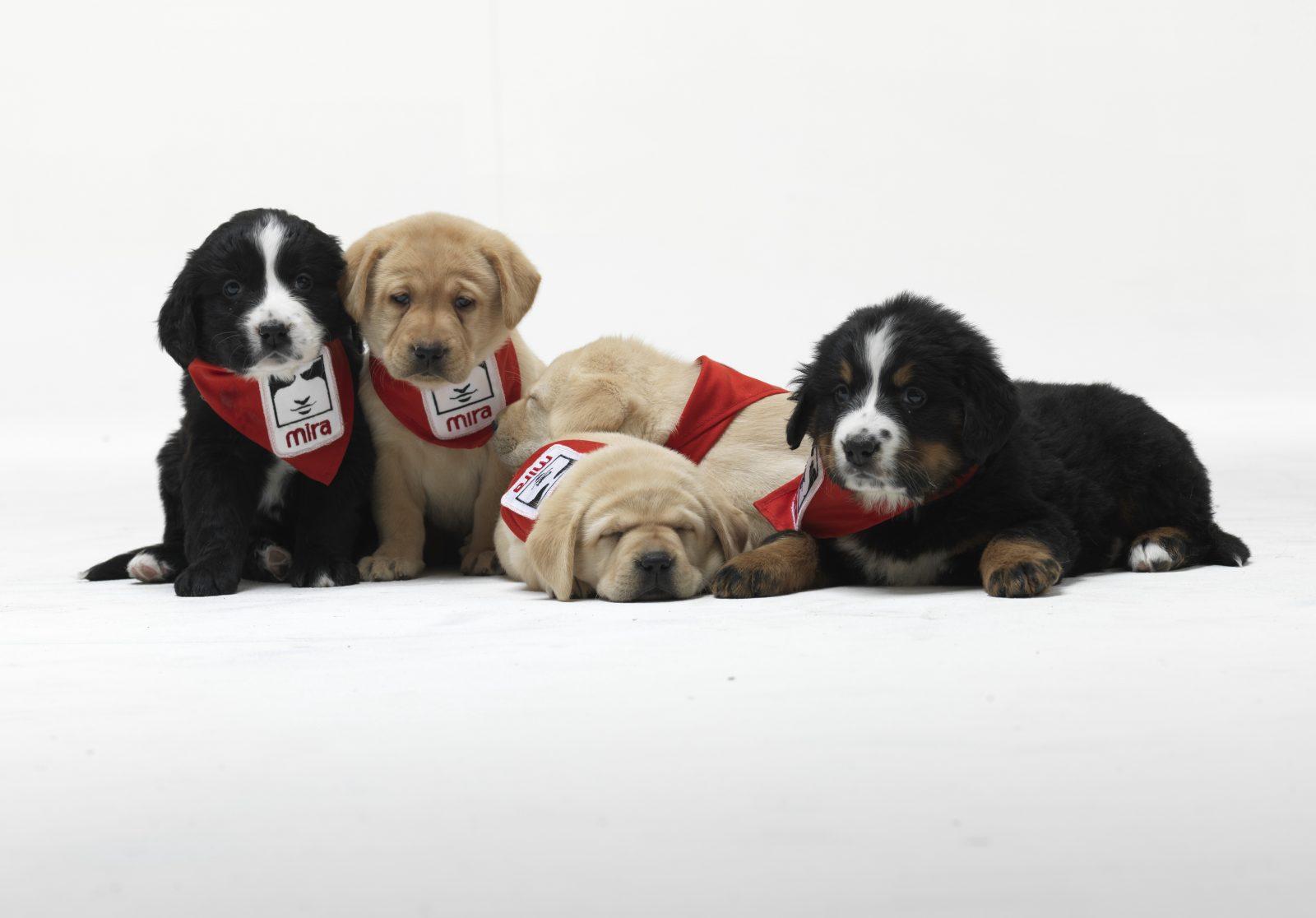 École Frédéric-Tétreau: un chien Mira pour aider les élèves