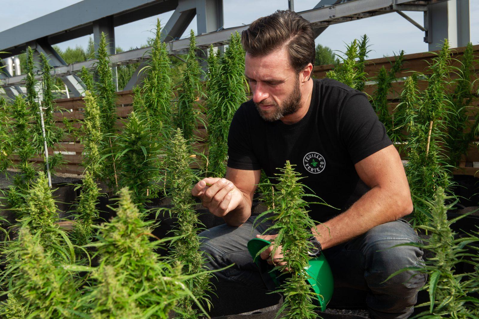 La Feuille Verte veut créer le Dom Pérignon du cannabis