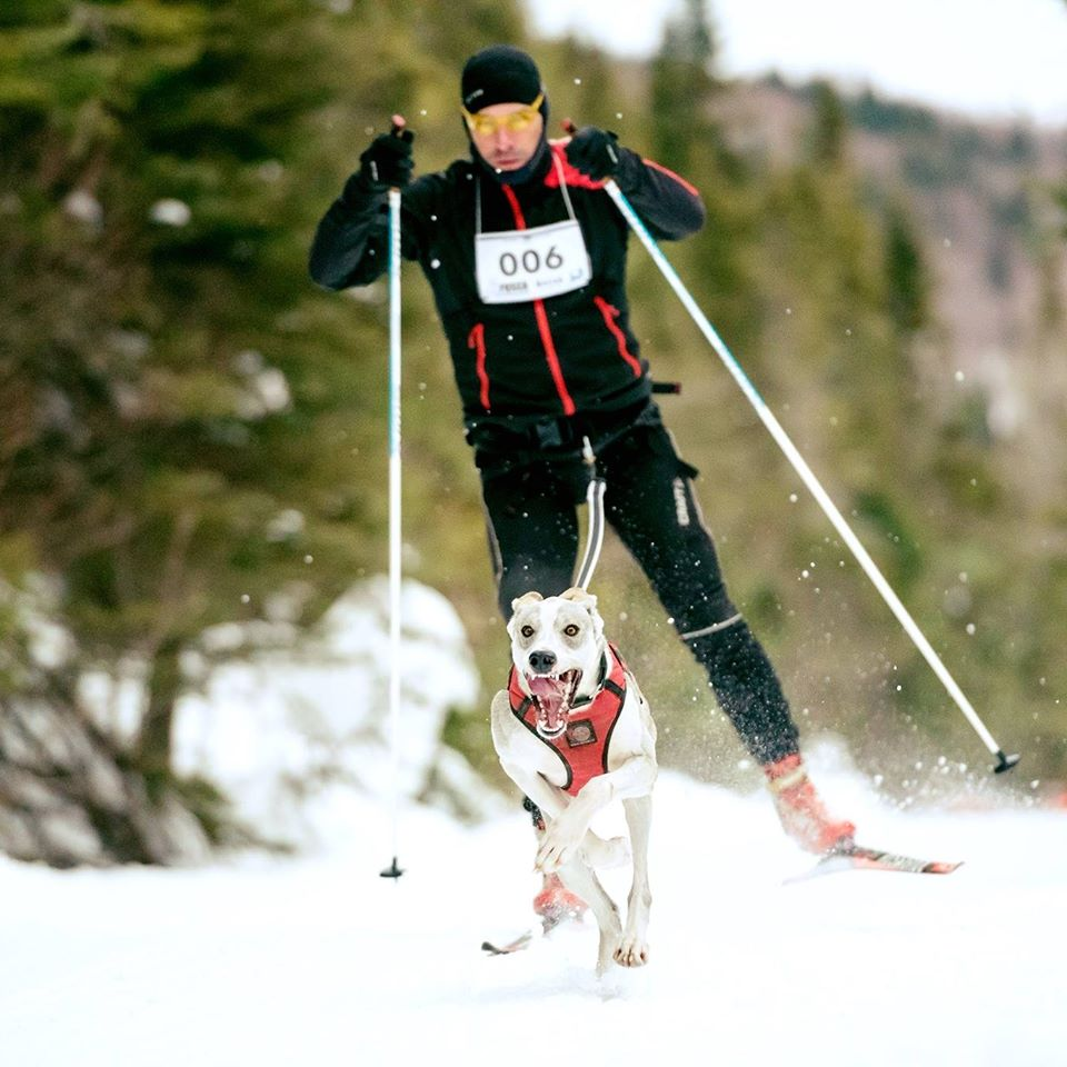 Francis Gélinas au championnat du monde de skijoring