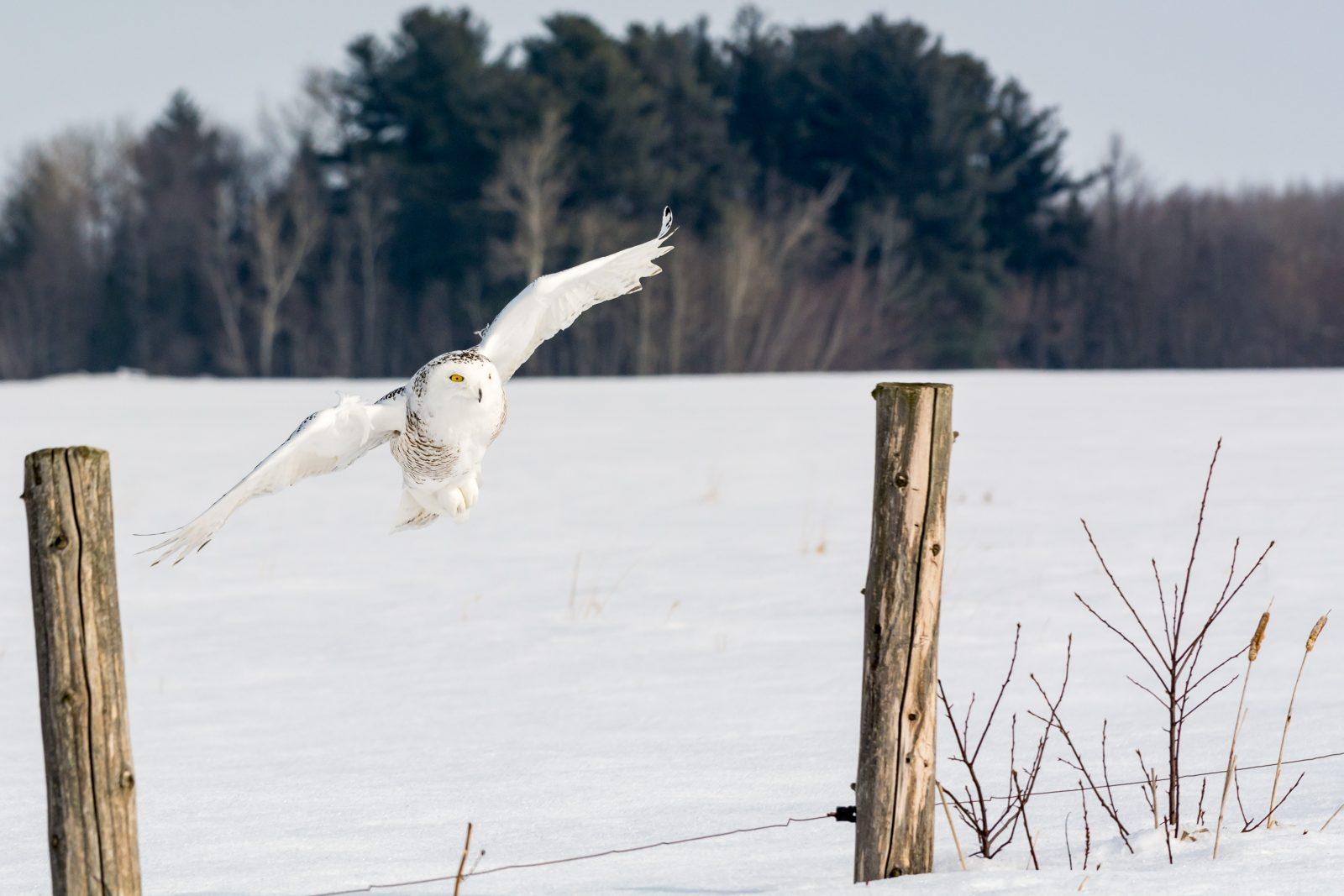 «Il y a plusieurs espèces d'oiseaux, il faut juste prendre le temps d'écouter et regarder» – Christian Noël
