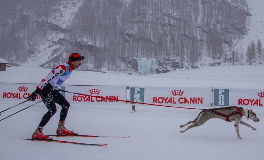 Skijoring: un apprentissage à la dure pour Francis Gélinas