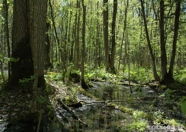 Préserver les milieux humides et hydriques
