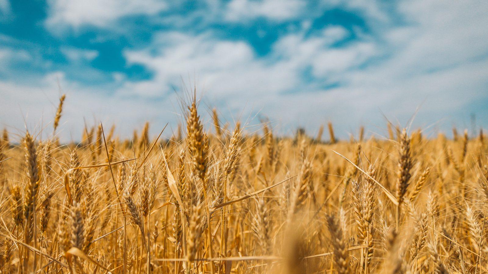 Les Producteurs de grains du Québec se rassemblent à Drummondville