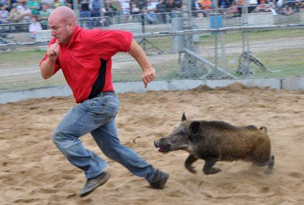 Loud, 2Frères, Kaïn et les Cowboys fringants se donneront rendez-vous au Festival du cochon