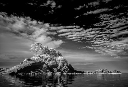 L'exposition le Royaume des fluides exprime la nature en noir et blanc
