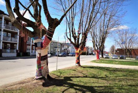 Des arbres décorés par les tricots des élèves artistes