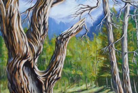 Axart met de l'avant les thèmes de la reforestation et de la fluidité