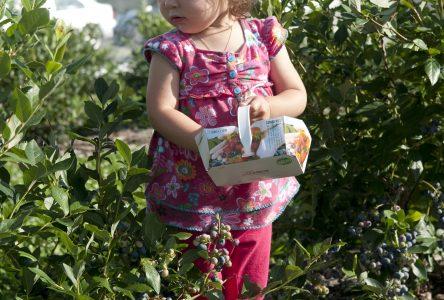 À la découverte des petits fruits de la région