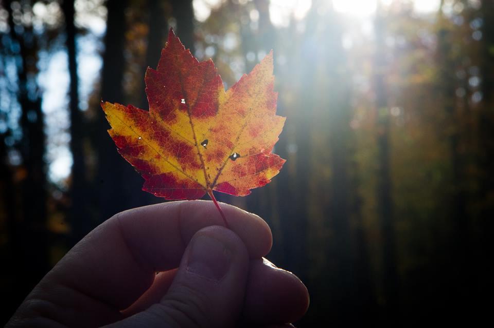 Quelques astuces pour réussir vos clichés d'automne