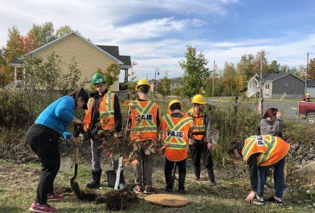 430 arbres plantés dans le secteur de la Commune