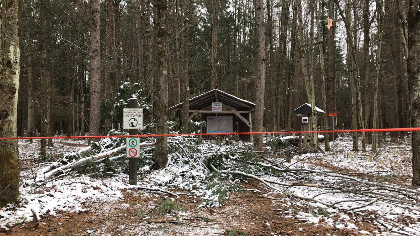 La Forêt Drummond, la grande oubliée de la tempête automnale