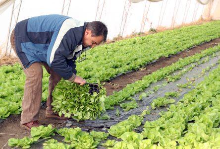 Encore plus de sentinelles pour supporter les agriculteurs