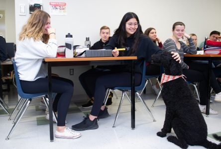 Sam, la nouvelle collègue de classe