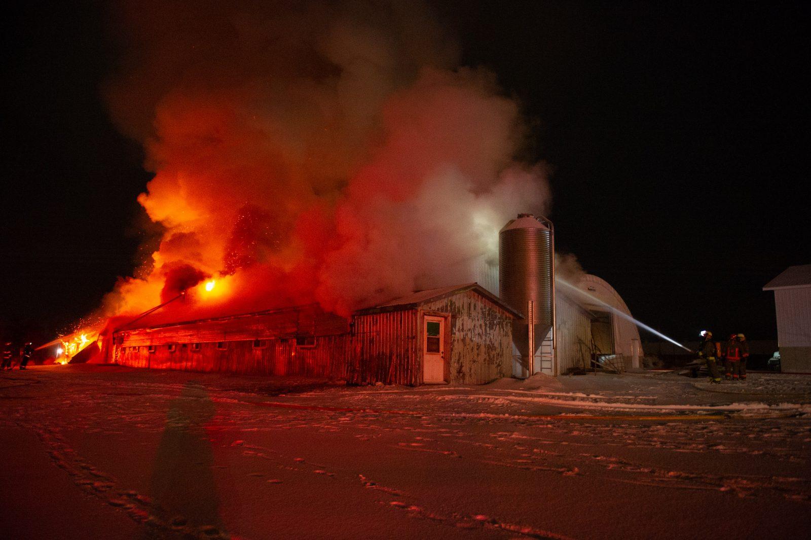 Plusieurs bêtes périssent dans un incendie à Wickham (photos et vidéo)