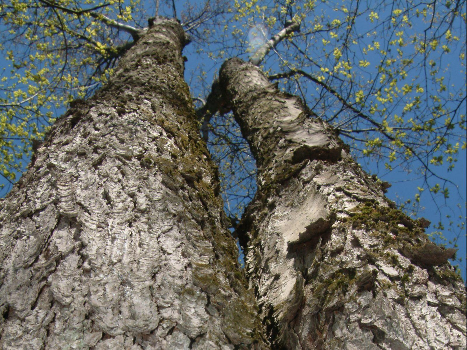 20 000 arbres seront plantés sur 25 ans à Drummondville