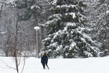 Drummondville veut conserver, voire augmenter, son couvert forestier