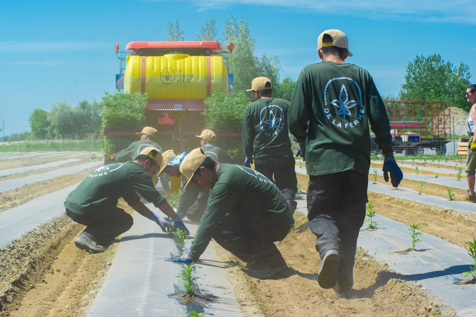 Les travailleurs guatémaltèques finalement dans les champs