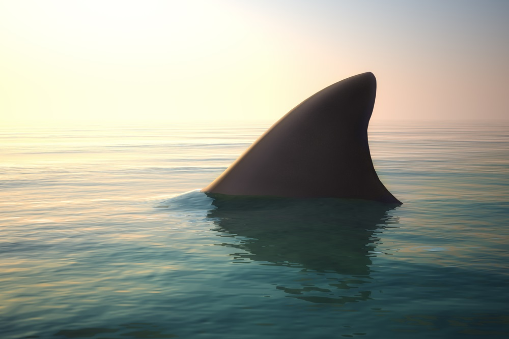 Requins en instance de disparition