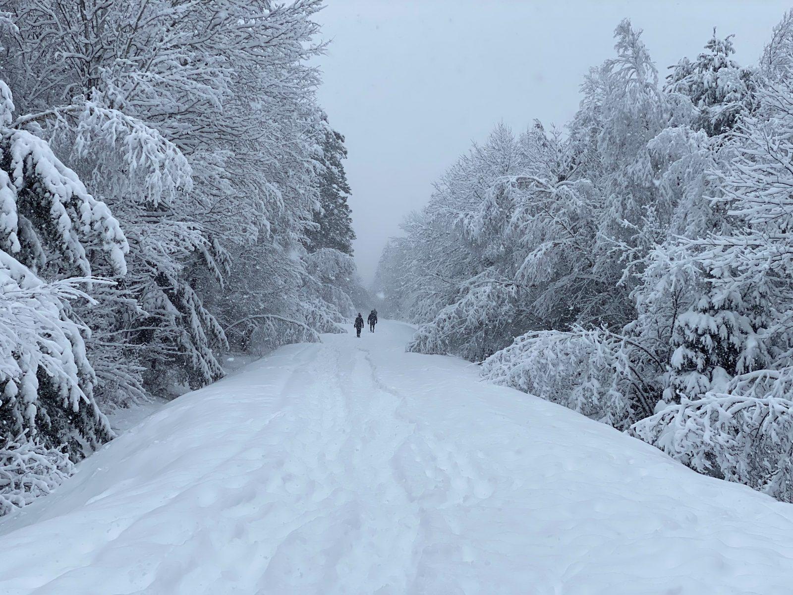 Parc régional de la Forêt Drummond: la MRC dévoile ses orientations