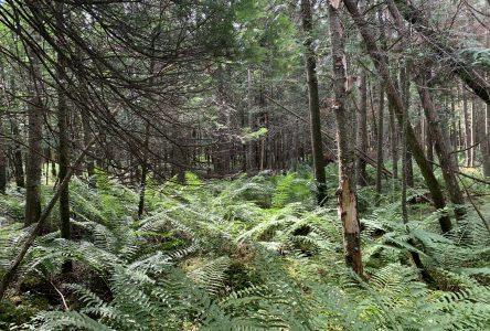 Cinq propriétaires de la MRC de Drummond s'engagent à protéger leur milieu humide