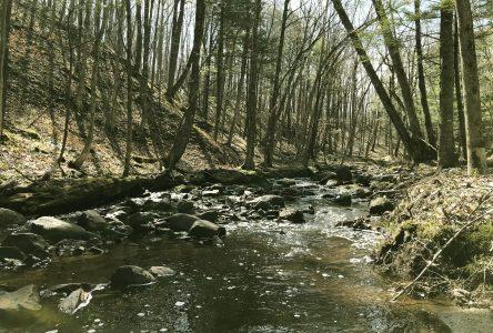 Parc régional : investissement de 307 000 $ pour la protection des milieux naturels