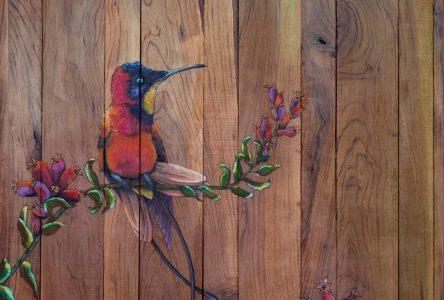 Les beautés de la nature, selon l'artiste Chantal Bourbeau