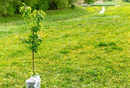 Initiatives environnementales: le second appel de projets est lancé