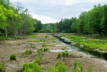 Des travaux effectués dans un marais de 1,25 kilomètre soulèvent la grogne