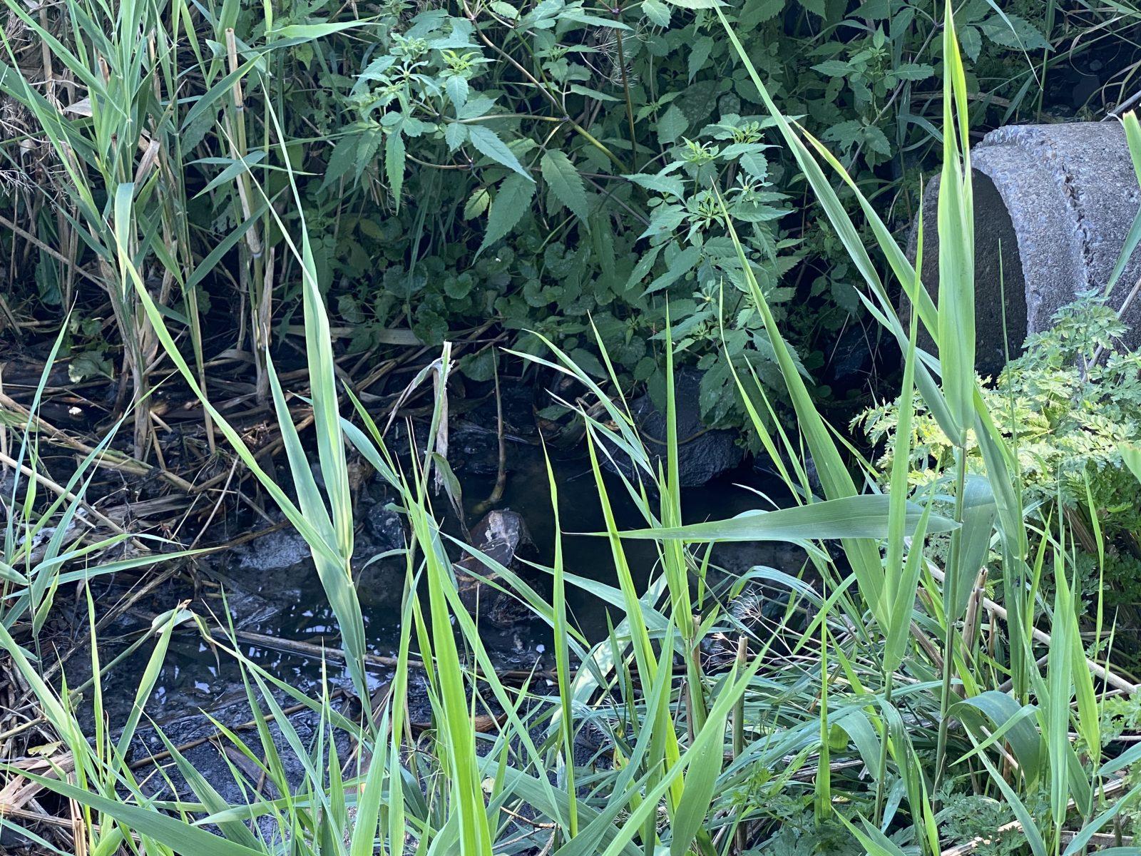Saint-Eugène : les eaux usées du village déversées dans les fossés