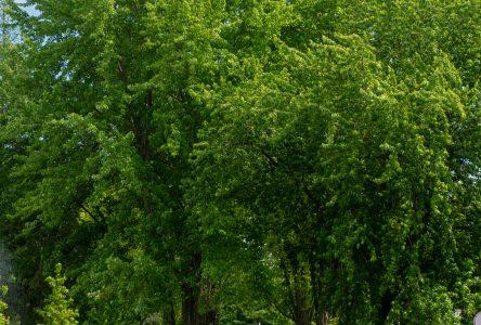 Saint-Lucien aménagera un site naturel de 15 hectares pour se ressourcer