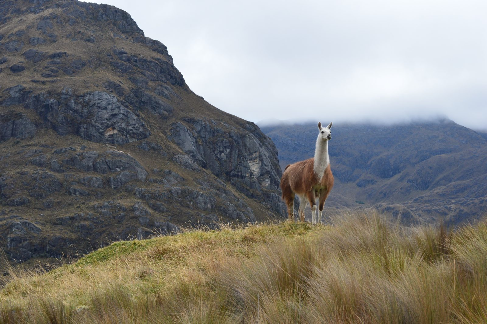 Ils choisissent une vie paisible en Équateur