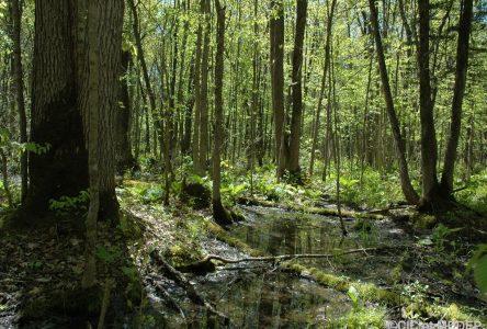 Drummondville veut conserver 7 000 hectares de plus d'ici 10 ans